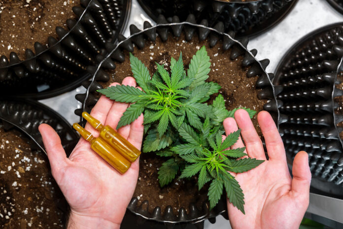 Medicinal Cannabis. Hands holding ampoules and Marijuana Leaves on Top of Plants