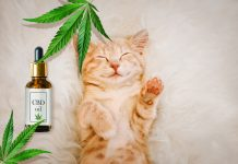 cbd oil for your pets