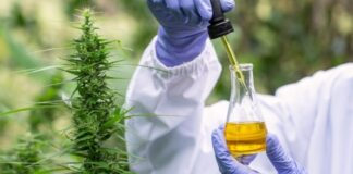 Why Technicians Test Cannabis for Pollutants
