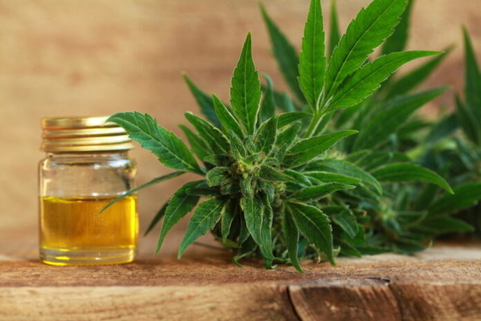 cannabis and cbd pros and cons