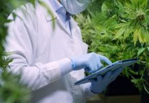 The Most Common Lower Classifications of Cannabis